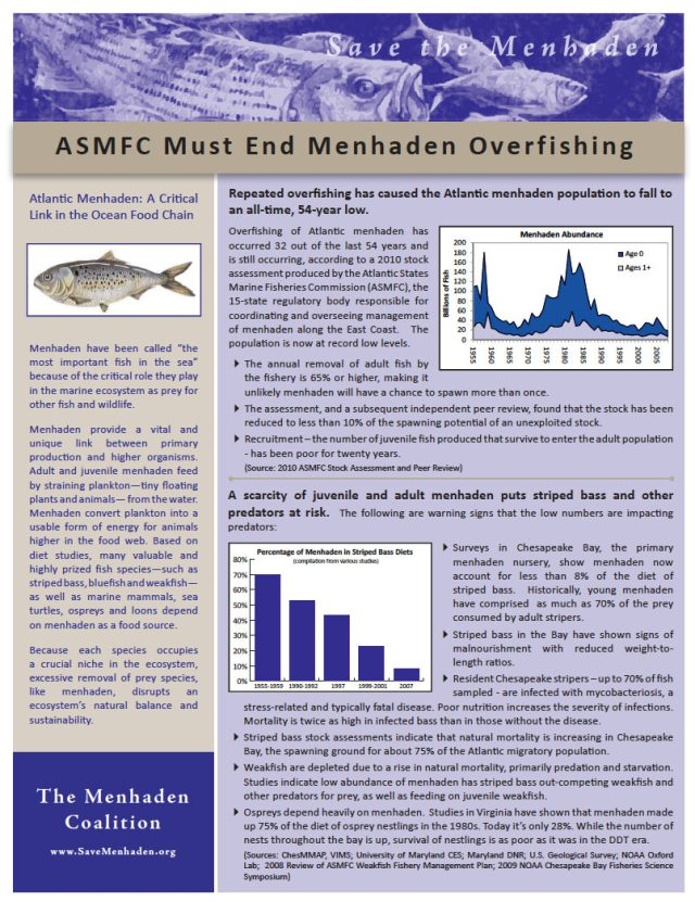 ASMFC Must End Menhaden Overfishing
