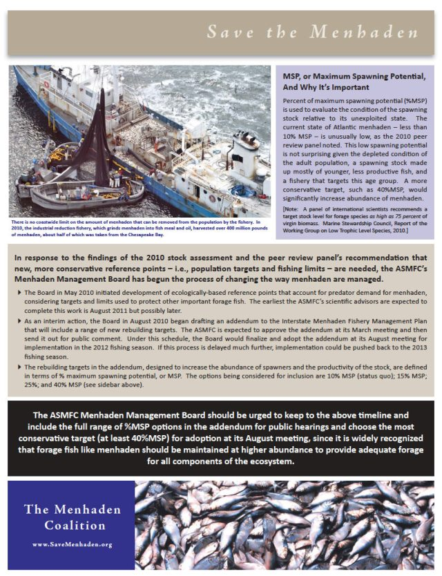 ASMFC Must End Menhaden Overfishing in Chesapeake Bay and Atlantic Ocean
